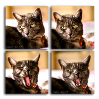 140715 Kiera yawn series of 4 SQ