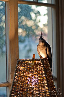 Poppy on her lamp