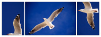 Flying Seagull Triptych --SAMPLE ONLY--